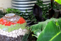 Bananas & rainwater tank
