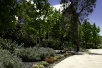 Mediterranean style planting