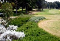 Native planting on golf course