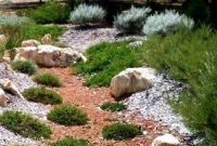 Rock garden with hardy groundcovers