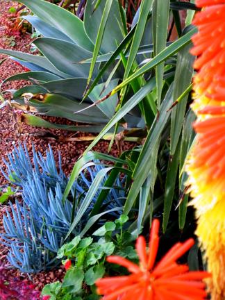Waterwise Plant Schemes Wild About Gardens Garden