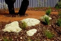 Grasstree, dianella and conostylis