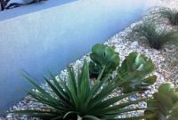 Yucca, kalanchoe and cordyline species