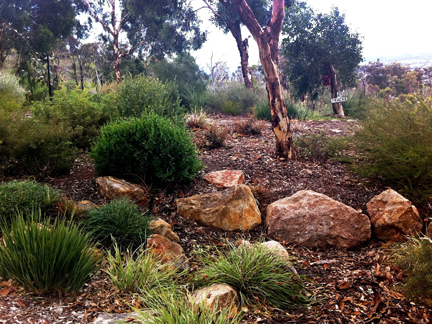 Garden Design Perth landscaping with local plants | wild about gardens || garden