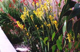 Waterwise plant schemes