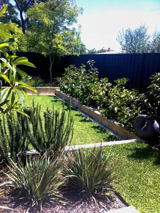 Attractive & easy care | WILD ABOUT GARDENS || Garden ...