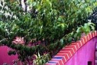 School fruit trees