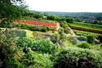 Proteas in Ferguson Valley