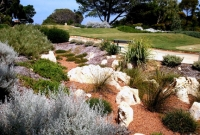 Waterwise planting on a golf course