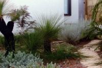 Coastal native garden