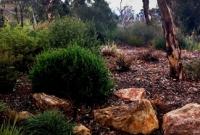 Hills garden using local plants