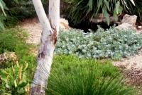 Small whitegum with native understorey
