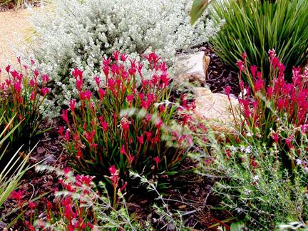 Garden Design Perth WA