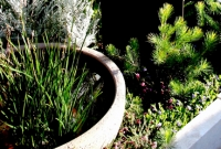 Calothamnus and native reed in water bowl