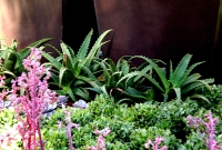 Flowering succulents and agave sp