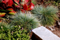 Grasses and succulents