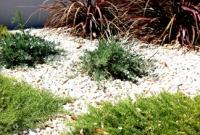 Hardy verge planting