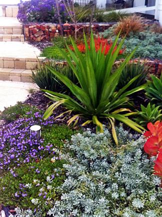 Mediterranean garden wild about gardens garden design for Garden design perth